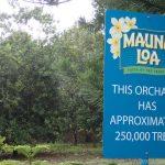 Mauna Loa Factory: Macadamia Nüsse
