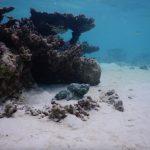 Unterwasserwelt an der Sandbank Alimatha: Steinfisch
