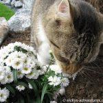 Lucky auf Erkundungstour im Garten