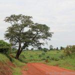 zwischen Murchison Falls und Fort Portal