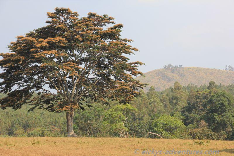 auf dem Weg in den Bwindi National Park