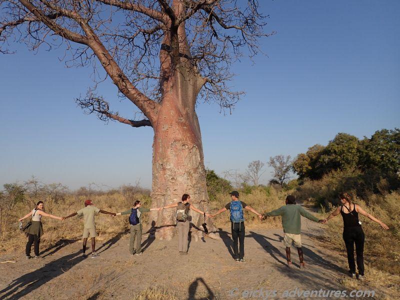 sie lang ist der Umfang eines Affenbrotbaums