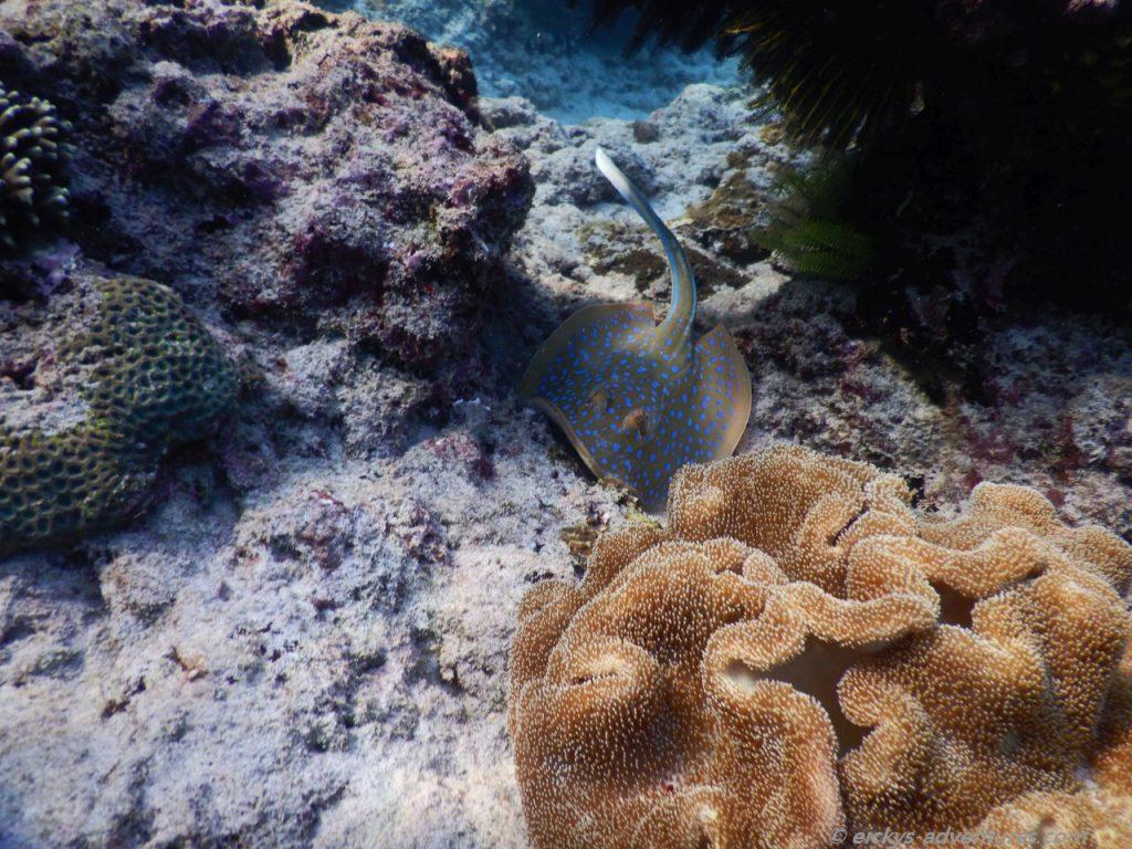 Unterwasserwelt in der Blue Lagoon, Padang Bai