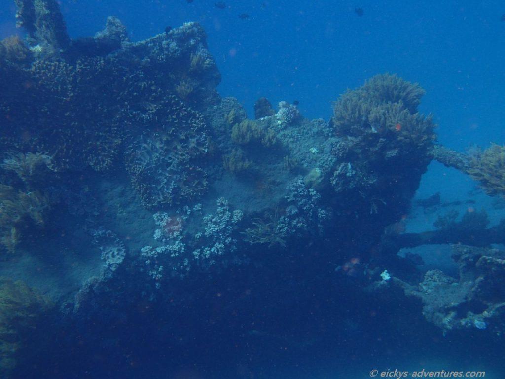 Unterwasserwelt am Japanese Shipwreck