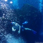 Unterwasserwelt an der USS Liberty in Tulamben