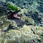 Unterwasserwelt im Westen von Koh Bon