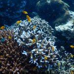 Unterwasserwelt bei den Surins