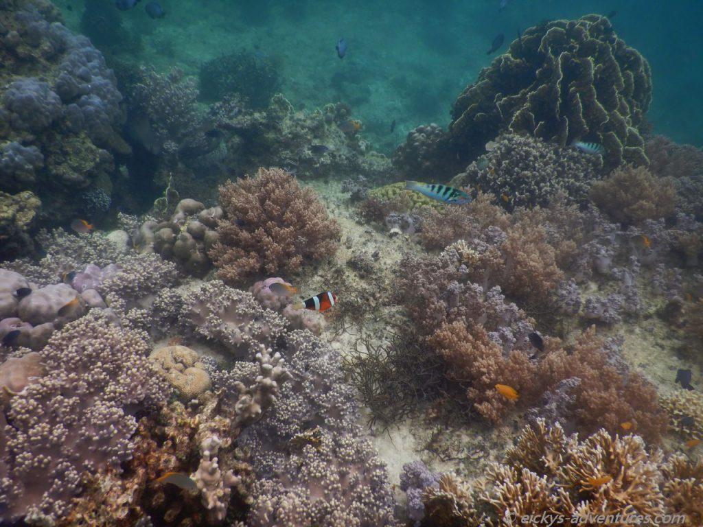 Unterwasserwelt an der Marine Sanctuary