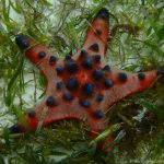 Unterwasserwelt auf Pamilacan