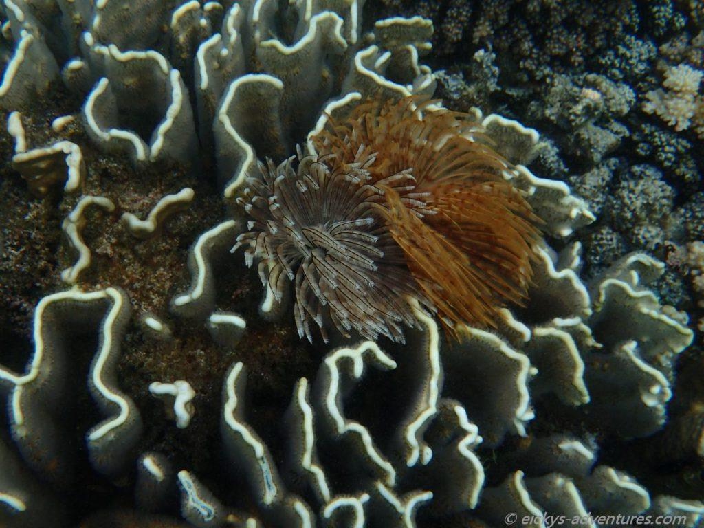 Unterwasserwelt am Coral Garden